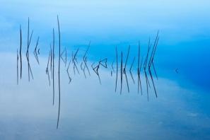 """""""Reeds in Water"""" by Judy Cummings"""